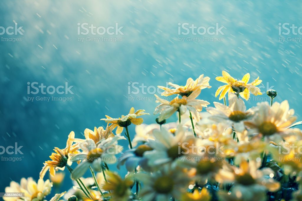 Vintage flower background in rainy weather – Foto