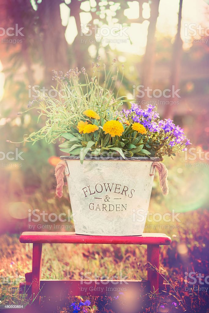 Vintage flower  bucket  with garden flowers over nature background stock photo