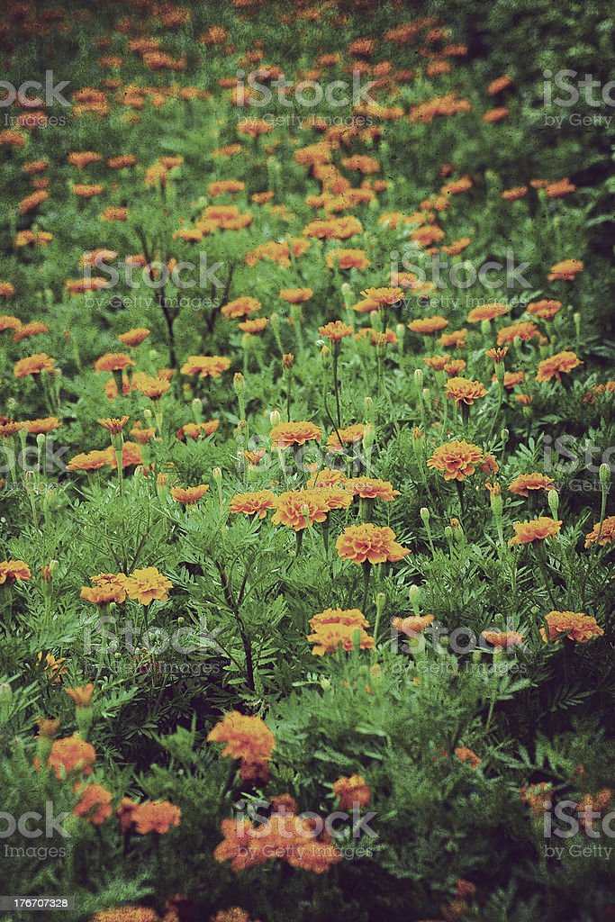 vintage flower paper background royalty-free stock photo