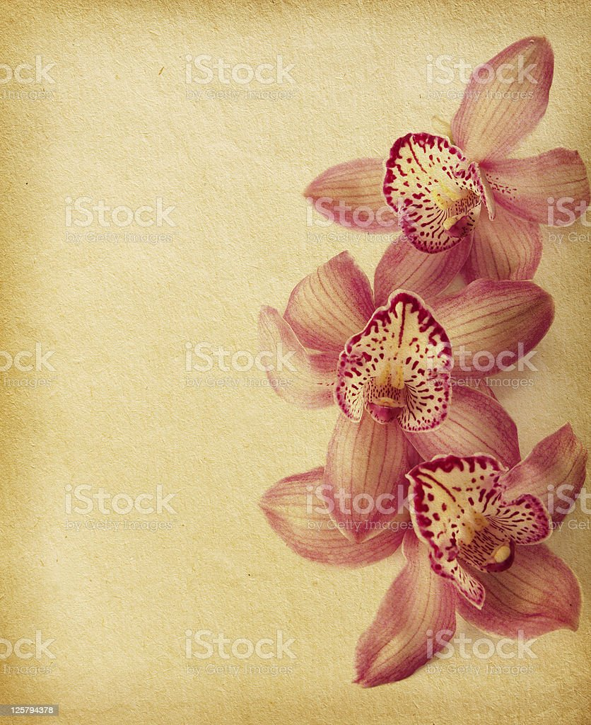 vintage flower paper textures. royalty-free stock photo