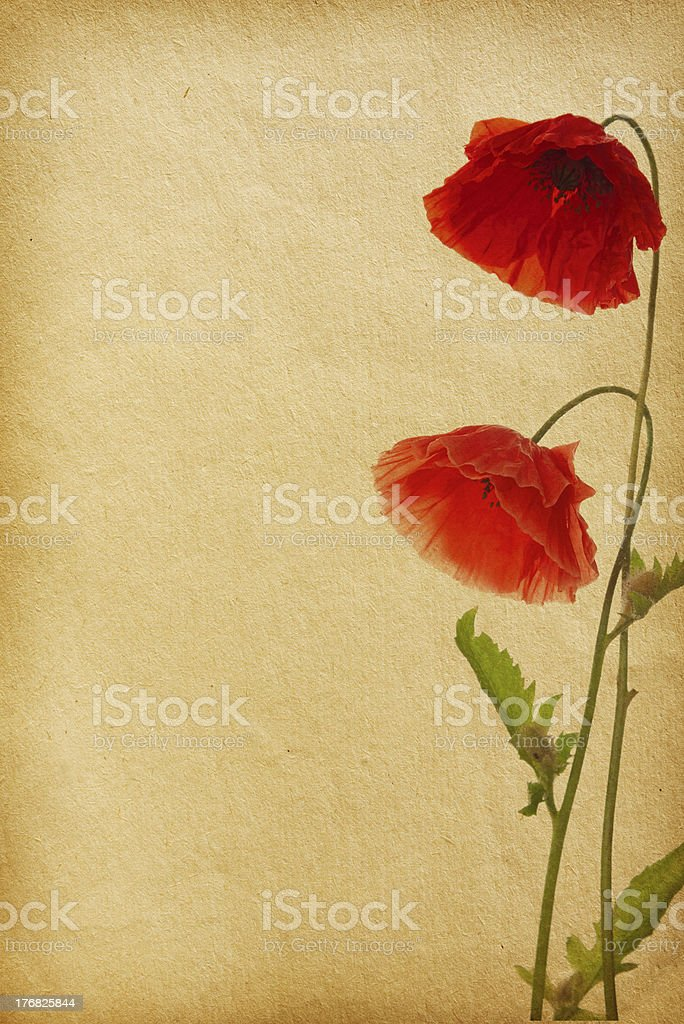 vintage flower paper textures. stock photo