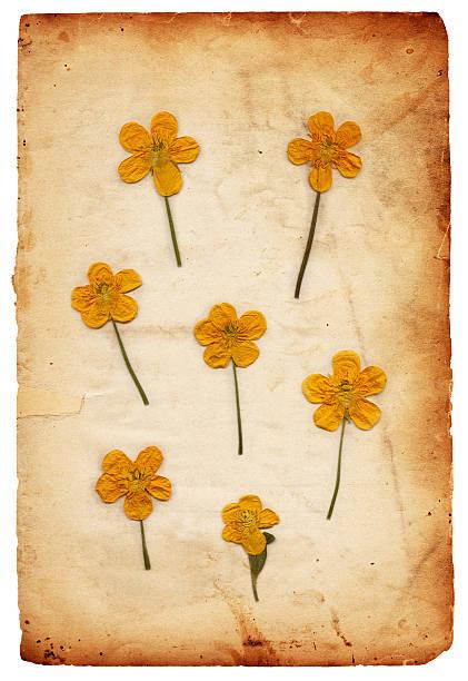 Vintage Flower Paper XXXL stock photo
