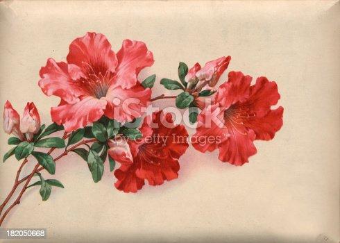 istock vintage flower 182050668