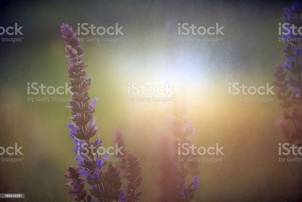 Vintage flower with old paper texture royalty-free stock photo