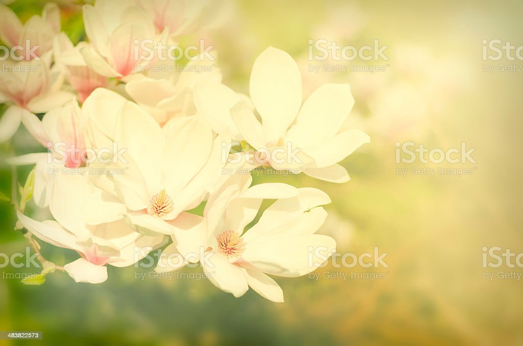 Vintage flowers stock photo