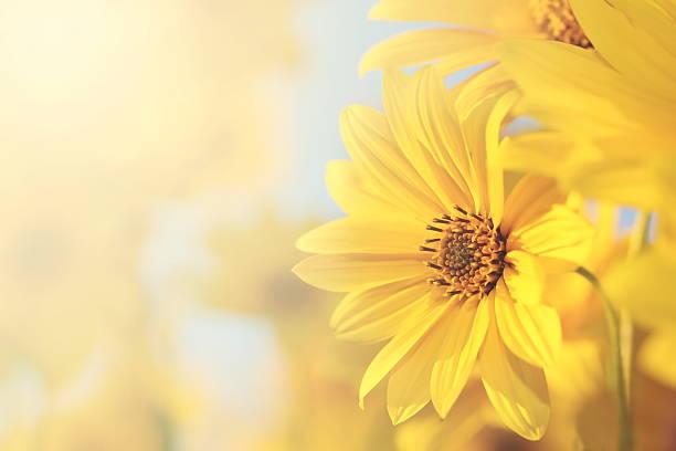 Vintage flowers picture id510410502?b=1&k=6&m=510410502&s=612x612&w=0&h=alzkmtqjipv1h5huzr1mbca6fgq35jbxiedoctxhn5o=