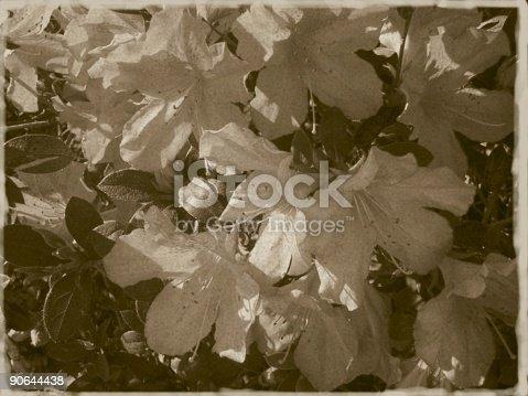 181053292istockphoto Vintage Flowers 90644438