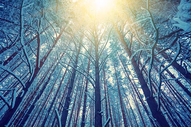 vintage-rahmen von bäumen bedeckt mit schnee bei sonnenuntergang - waldmalerei stock-fotos und bilder