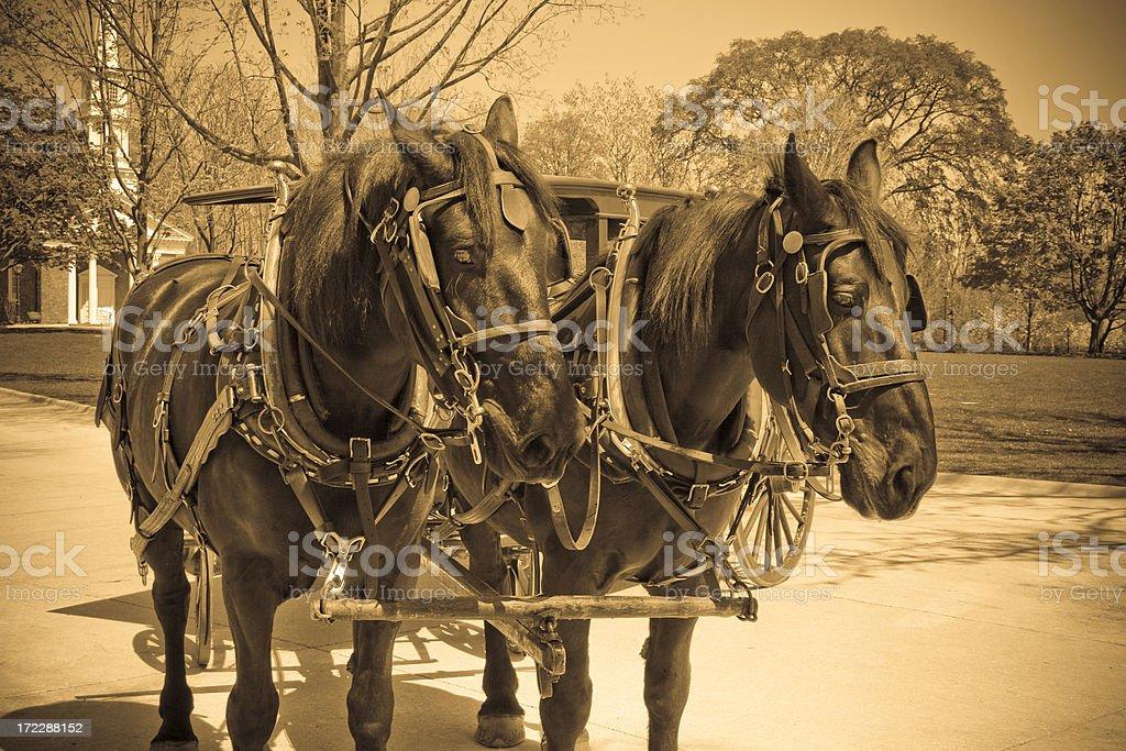 Vintage Horse n' Buggy stock photo
