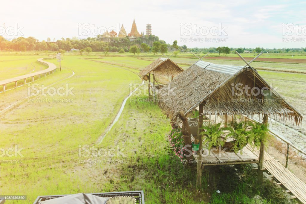 vintage hut in rice field on with sunlight stock photo