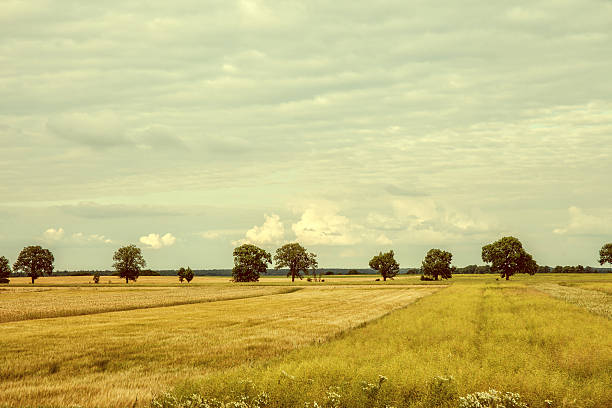 vintage image cultivated fields. - sepia stock photos and pictures