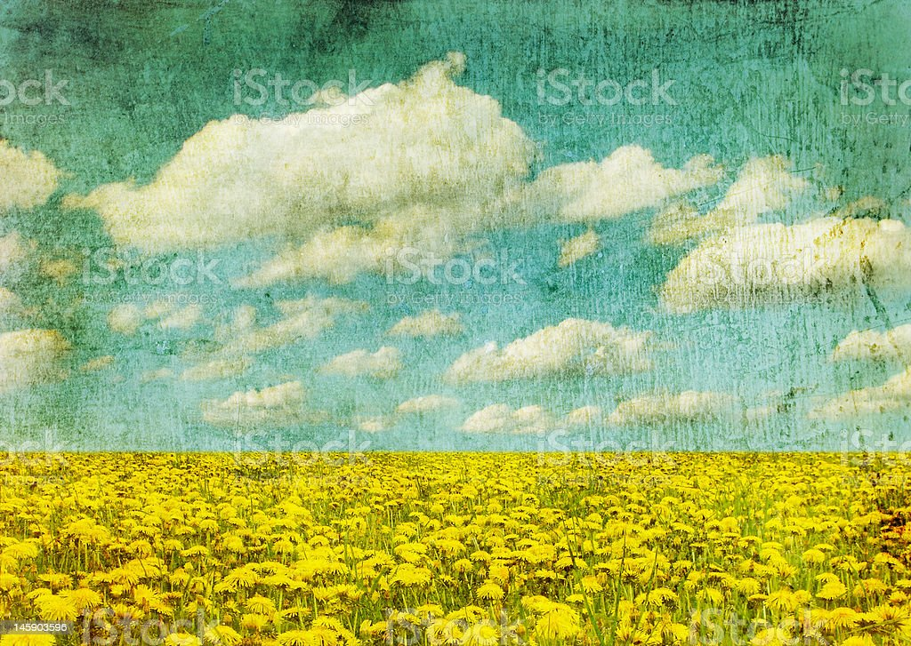 vintage image of dandelion field royalty-free stock photo