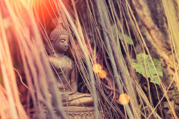 Vintage image style of Buddha statue under the big green tree and root , Thailand stock photo