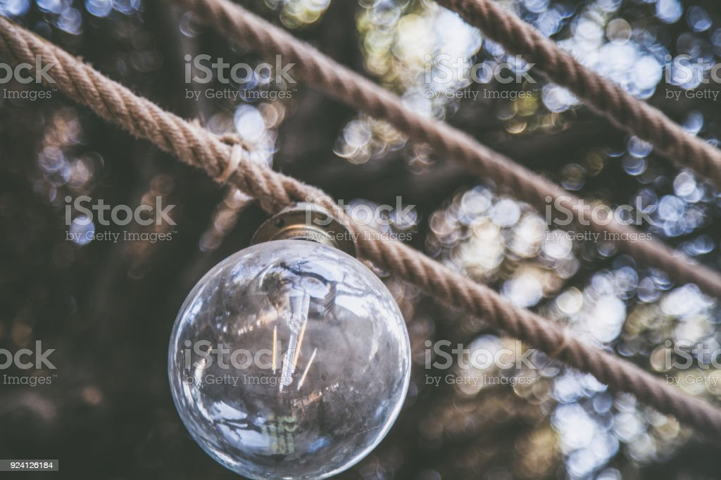 Vintage incandescent Edison type bulb on tree stock photo