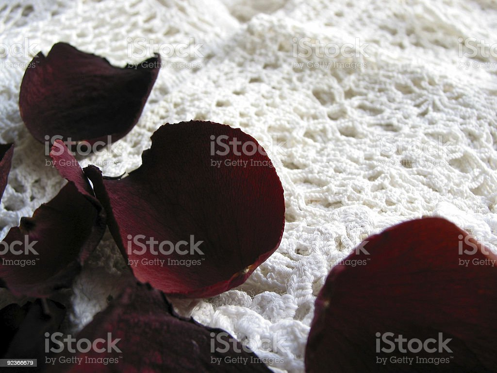 Vintage lace with dry rose petals royalty-free stock photo