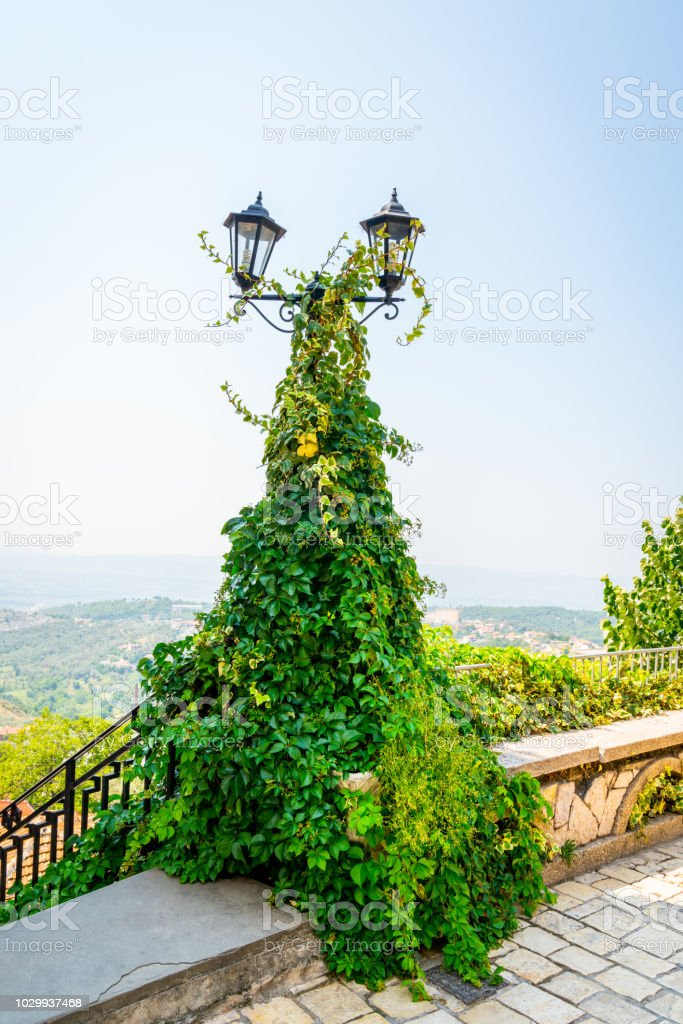 Vintage lamp post with two lanterns covered with thick green ivi creeper plant. Scenic landscape view in the background. stock photo