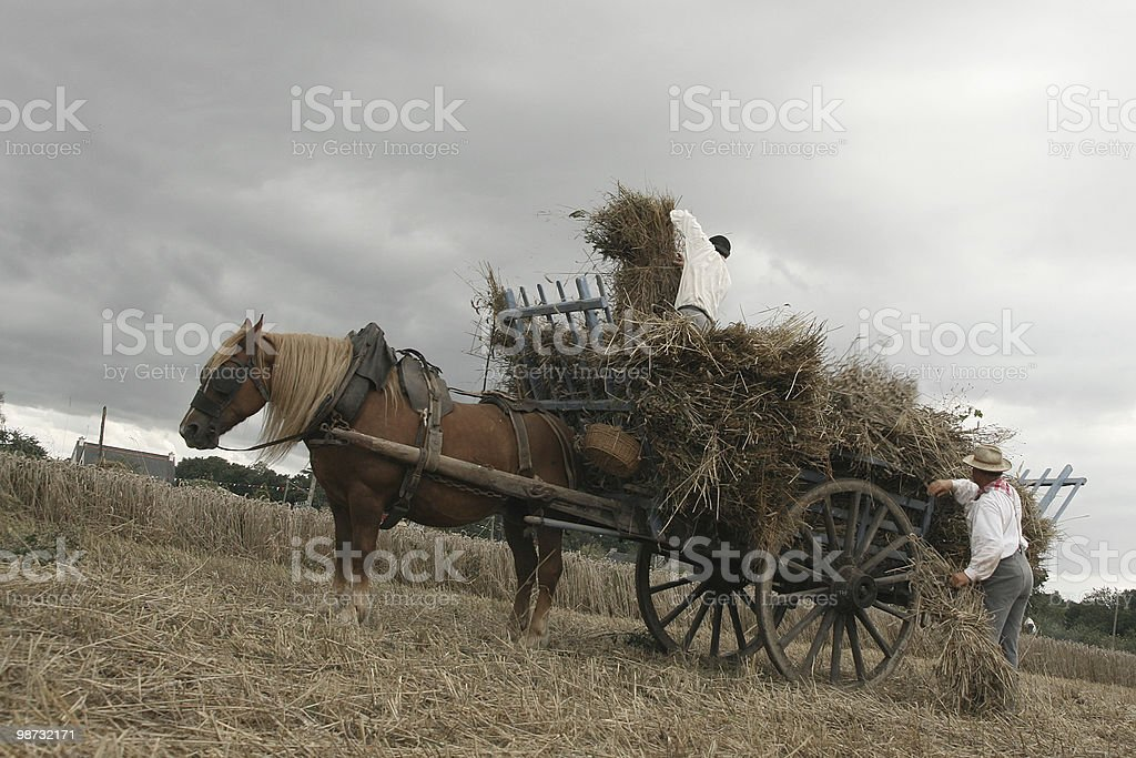 Vintage manual harvest scene royalty free stockfoto