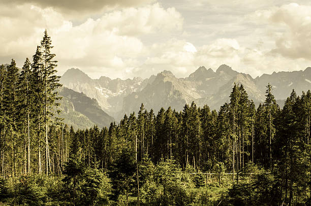 Vintage mountains landscape stock photo