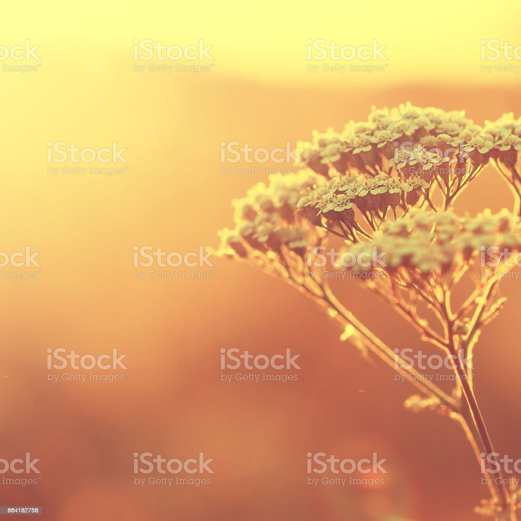 vintage nature background royalty-free stock photo