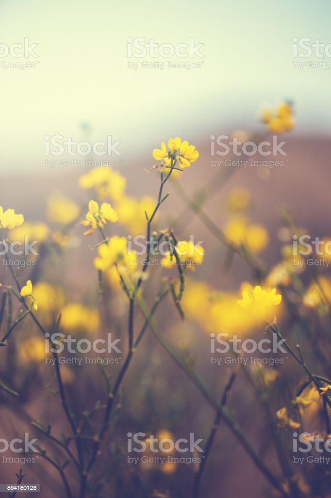 vintage nature macro closeup beautiful flowers. Outdoor background royalty-free stock photo