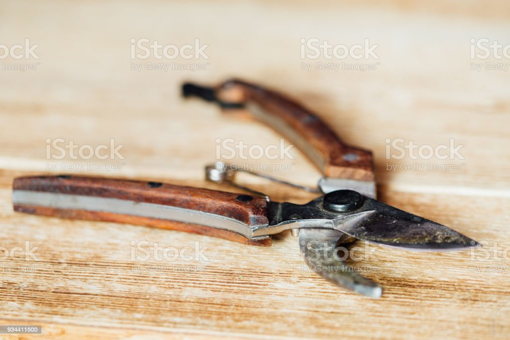 Photo libre de droit de Vintage Secateur De Jardin Ancienne Sur Une Table  En Bois Pinces À Ongles banque d\'images et plus d\'images libres de droit de  ...
