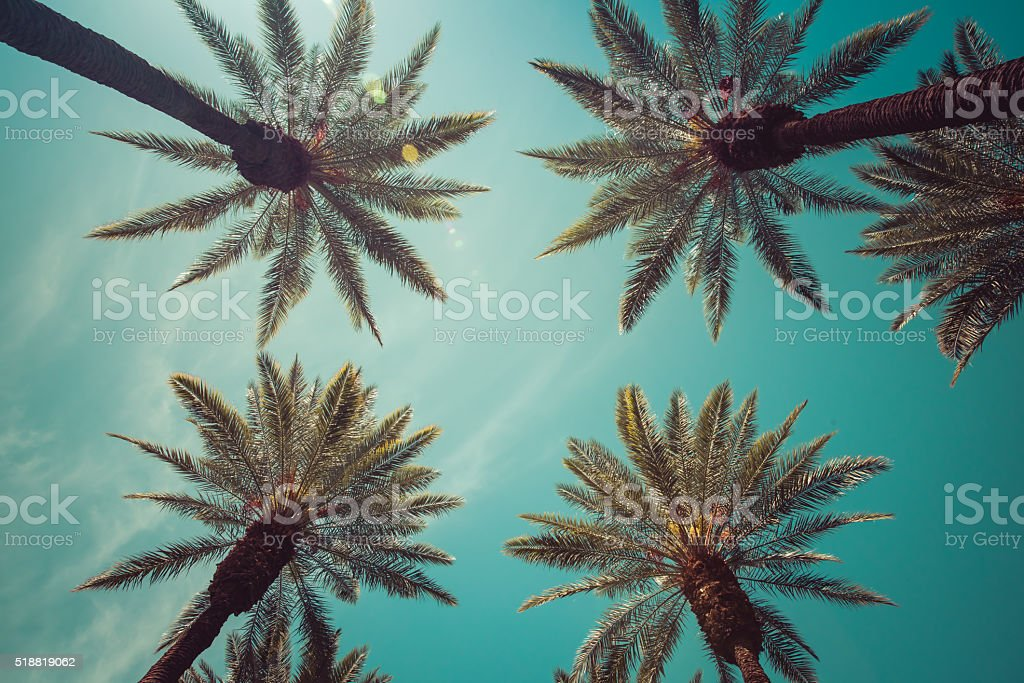 Vintage palm trees with lens flare stock photo