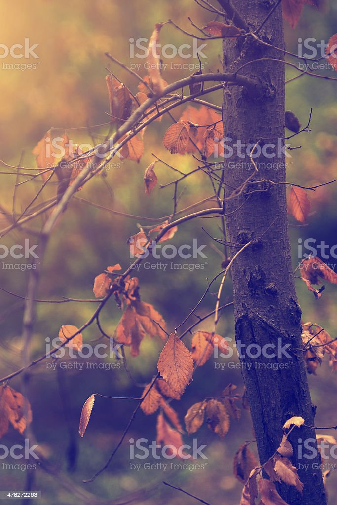Vintage photo of autumn leaves in October royalty-free stock photo