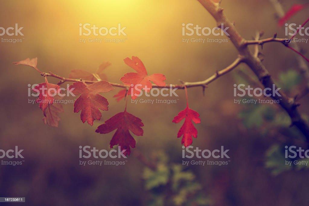 Vintage photo of autumn leaves royalty-free stock photo