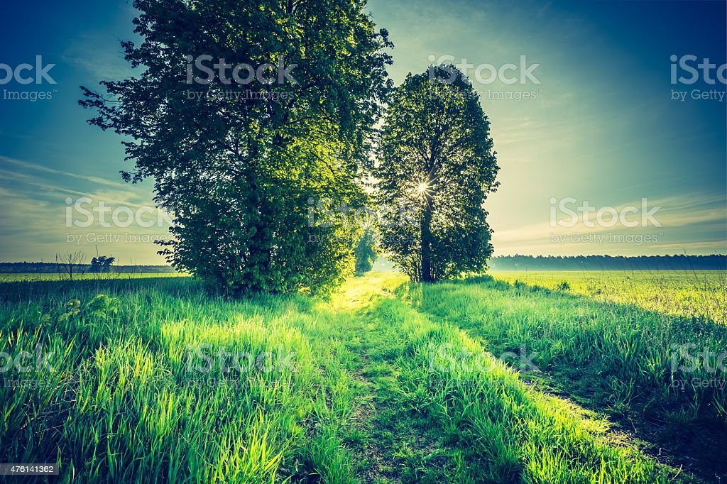 Vintage photo of beautiful alley of trees stock photo