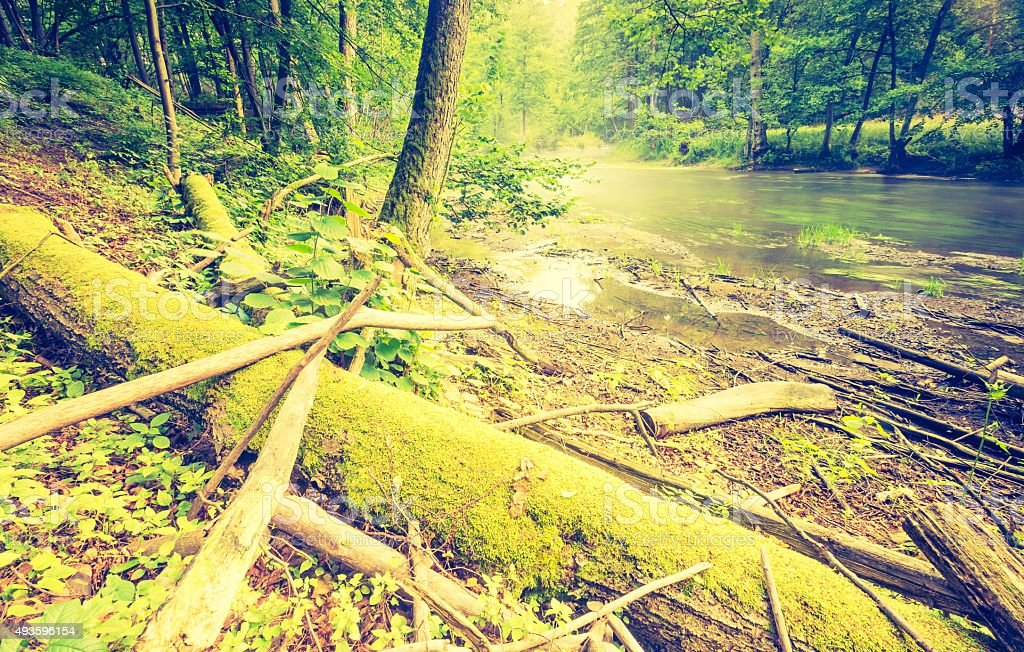 Vintage photo of beautiful summer forest with wild river. stock photo