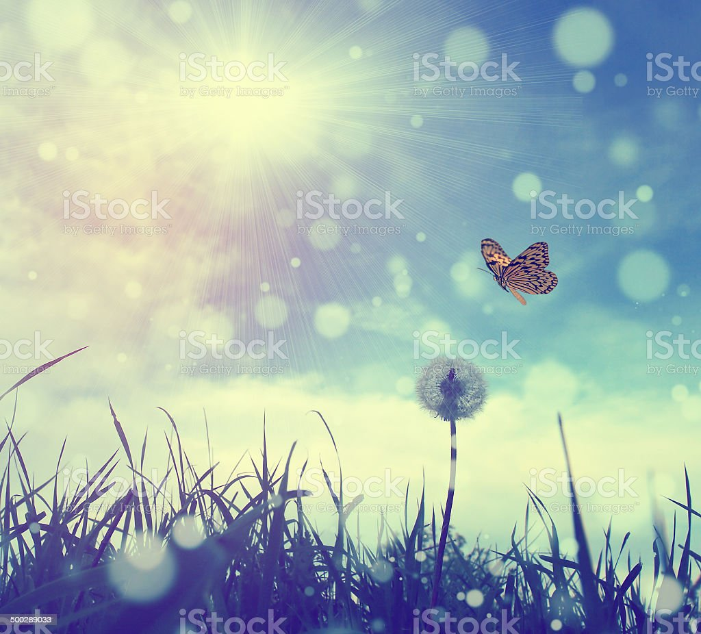 Vintage photo of butterfly and dandelion stock photo