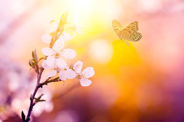 Vintage photo of butterfly and flower picture id500303701?b=1&k=6&m=500303701&s=612x612&w=0&h=izdlhnmopewab1s4aav7mmlzqhzdwwgp dw3mesx jk=