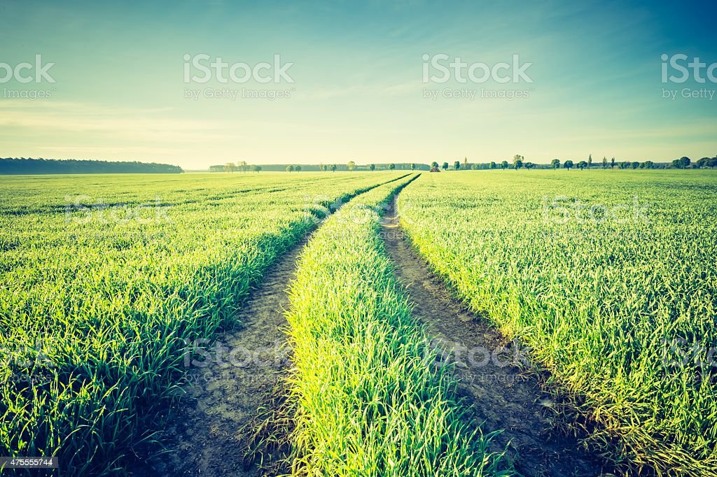 Vintage photo of idyllic sunrise over young cereal field. stock photo