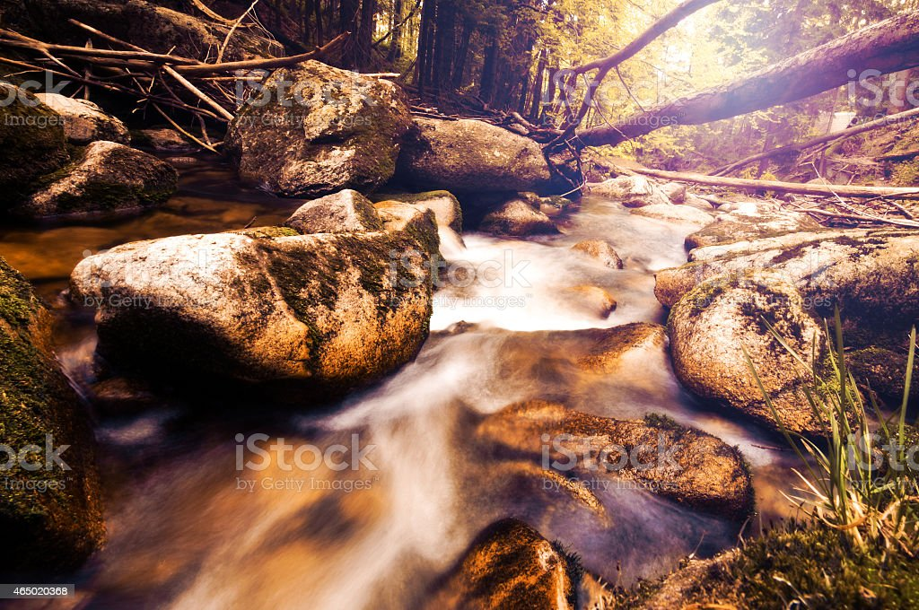 vintage photo of river in forest stock photo