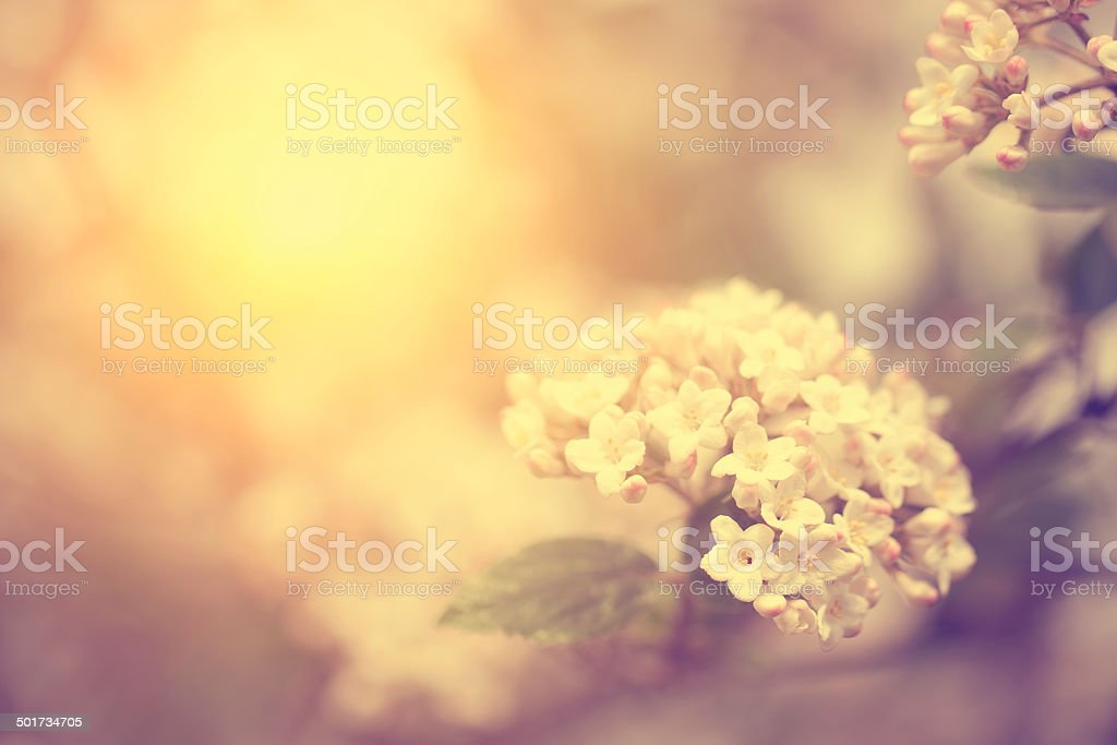 Vintage photo of tree flower stock photo