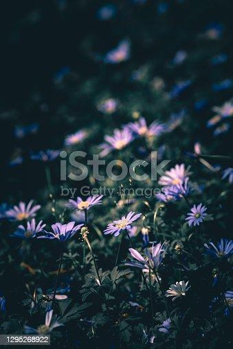 istock Vintage photo of wild flower; Nature Background 1295268922