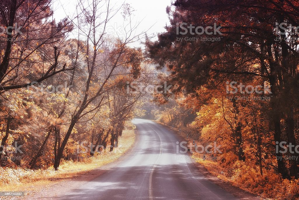 Vintage picture of autumn forest royalty-free stock photo