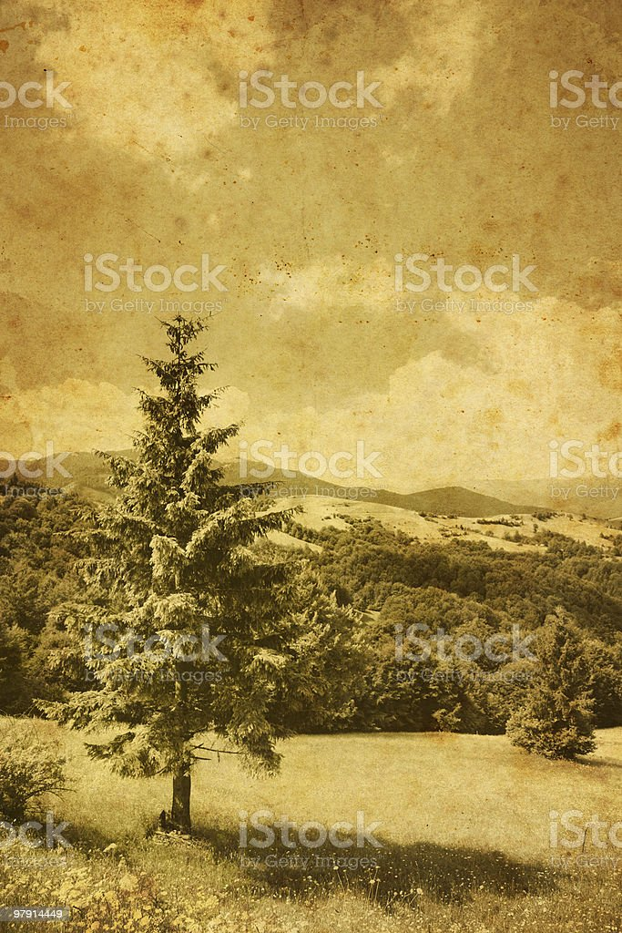 vintage pine tree photo royalty-free stock photo