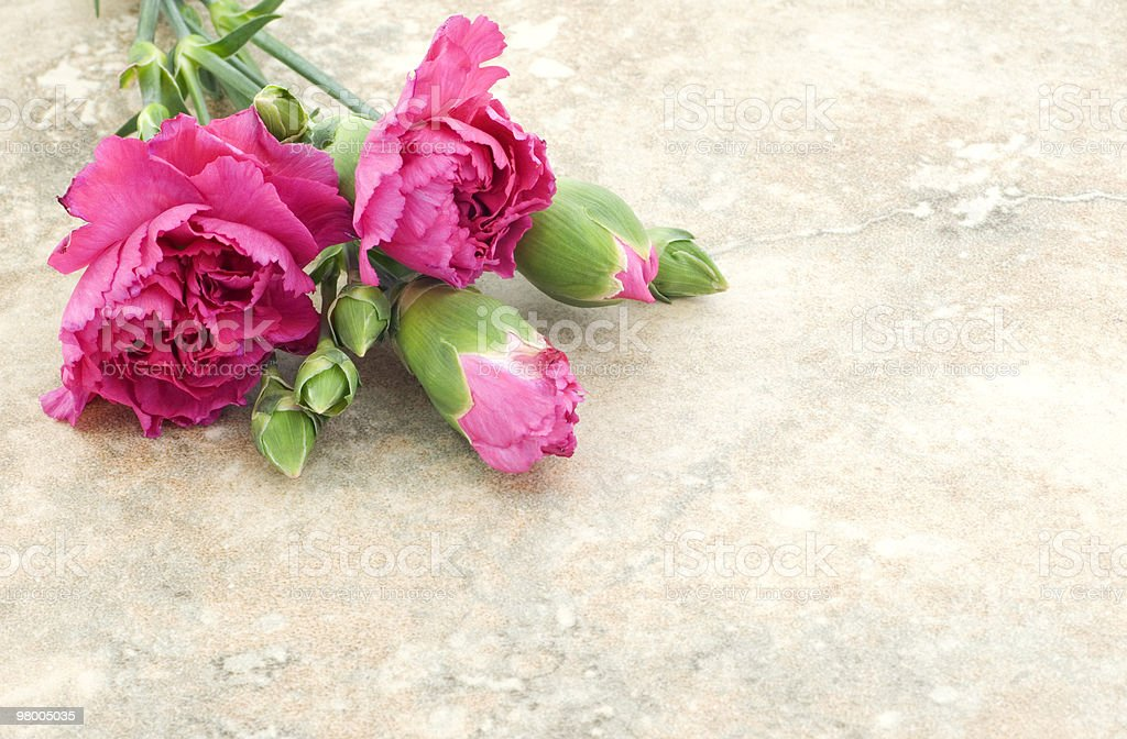 Vintage Pink Carnations royalty-free stock photo