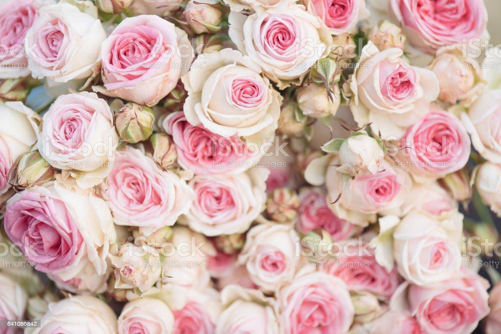 Vintage Pink Roses Background Vintage Decoration Stock Photo More
