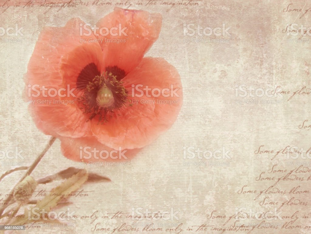 Vintage Postcard Template With Poppy Flower On Shabby Paper Stock