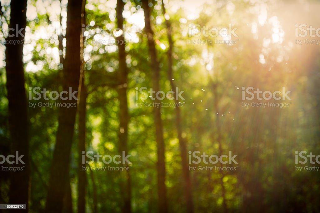 Винтаж ретро лесной пейзаж с размытым боке информации и стоковое фото