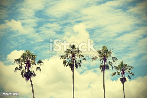 Four tall Palm trees with blue cloud filled sky background. Vintage, retro effect.
