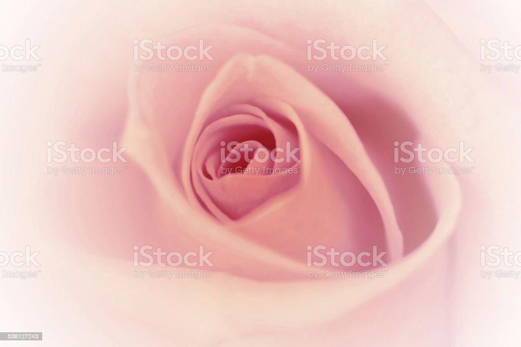 Rosa Sfondo Vintage Con Bordo Bianco Sfumato Soft Focus Fotografie