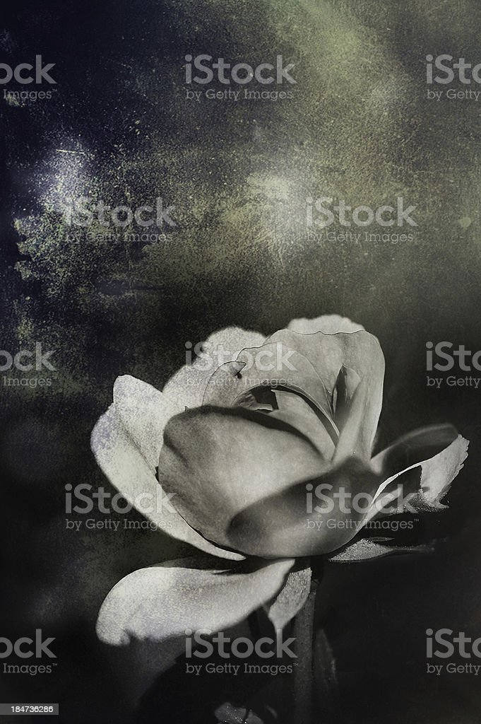 Vintage Roses - Fine art photography royalty-free stock photo