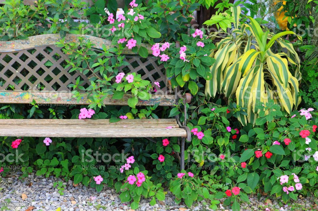 Heavy Duty Counter Stools, Vintage Rustic Garden Bench With Shade Loving Plant Mix In Tropical Jungle Style Stock Photo Download Image Now Istock