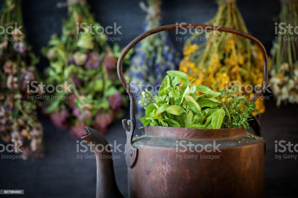 Vintage rustic tea kettle full of healthy herbs. Hanging medicinal plants on background. Herbal medicine. stock photo