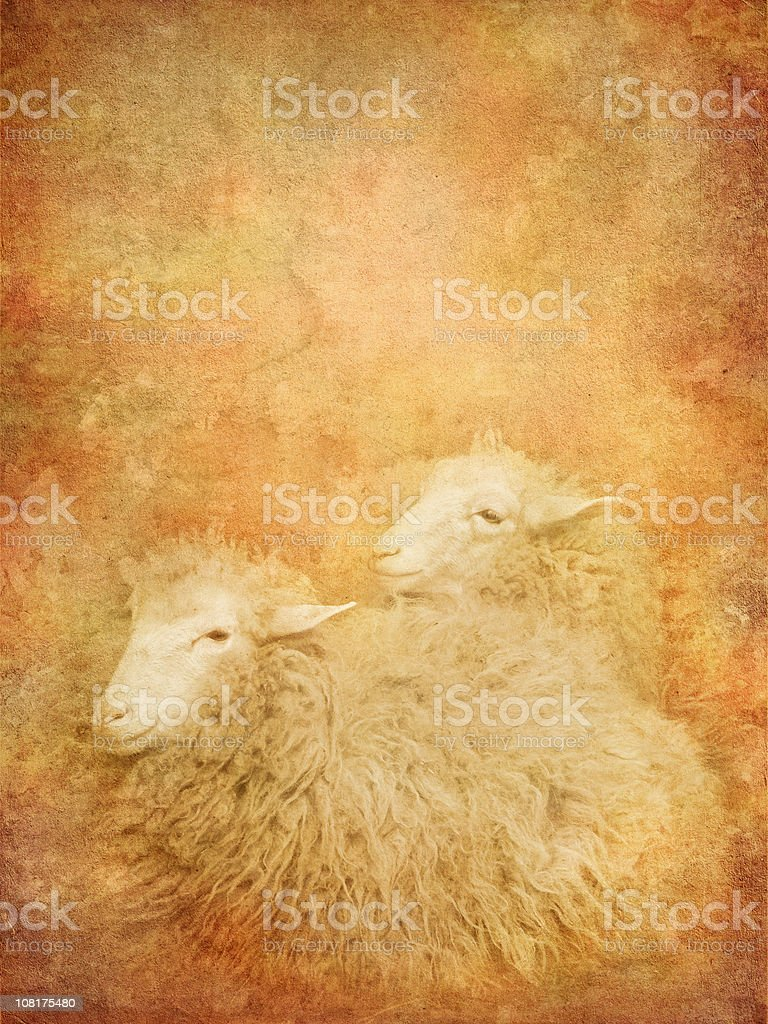 vintage sheep stock photo
