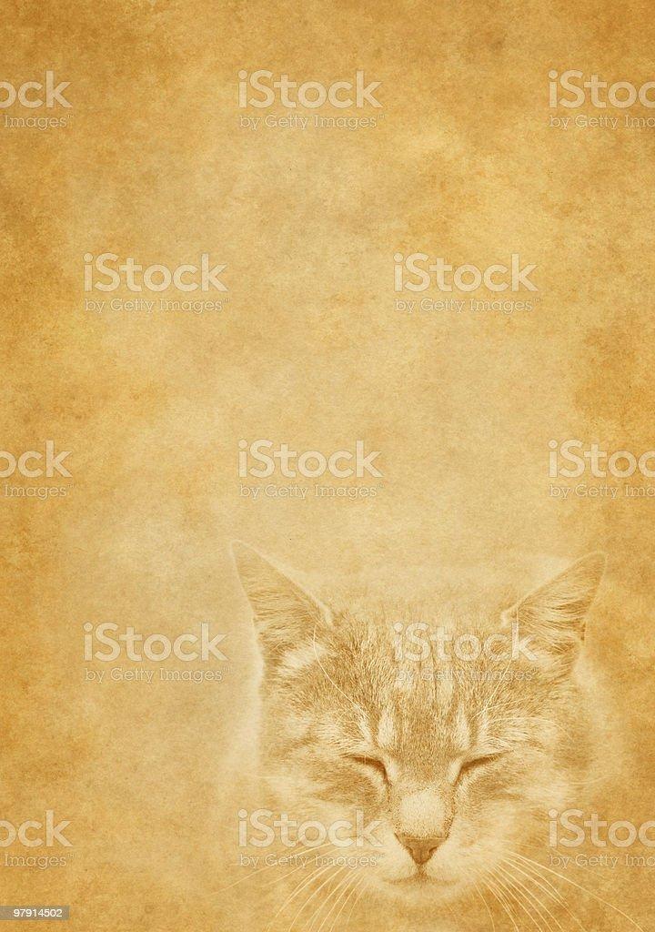 vintage sleeping cat royalty-free stock photo