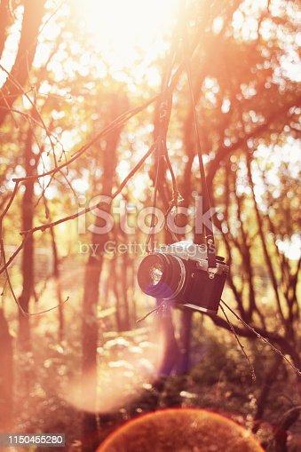Vintage slr film camera hanging on a tree branch